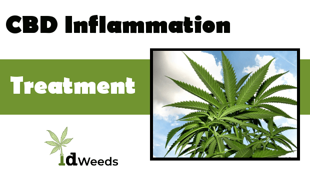 CBD Inflammation Treatment